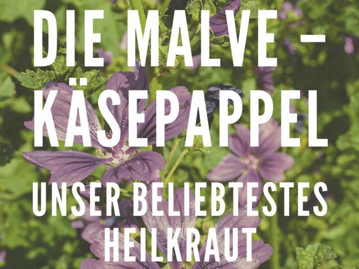 Die Malve – Käsepappel. Unser beliebtestes Heilkraut.